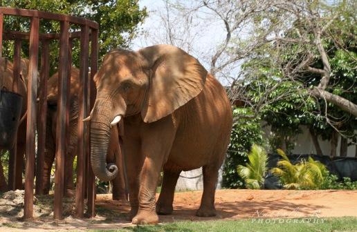 la sieste des élephants