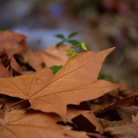 L'automne en Savoie  ...